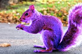 How to land a Purple Squirrel Recruiter…